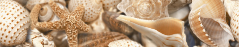 Sea Breeze Shells 30х6