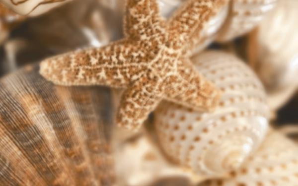 Sea Breeze Shells Decore №1 60х30