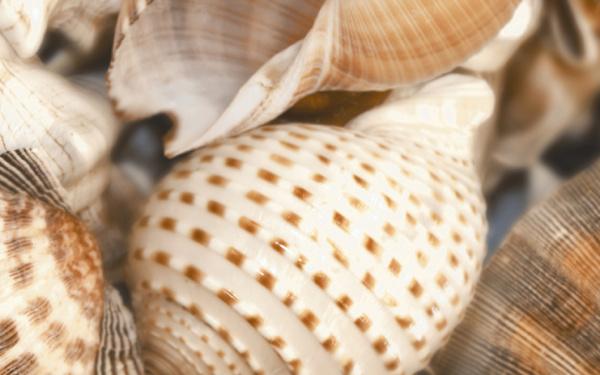Sea Breeze Shells Decore №2 60х30