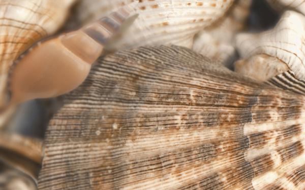 Sea Breeze Shells Decore №3 60х30