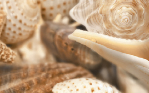 Sea Breeze Shells 60х3